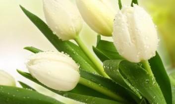 Nagyon Boldog Nőnapot Kívánuk Minden Kedves Női Olvasónknak!