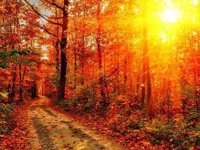 156546 őszi képek 2 201309