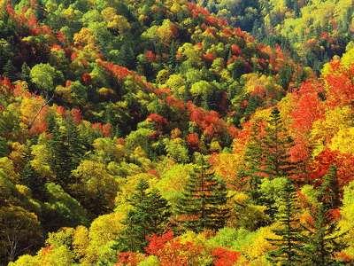 175405 őszi képek 1 201309