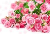 Rózsás hangulatban!