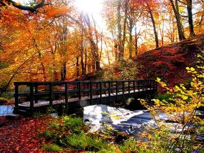 őszi erdő, patak fahíd 199371