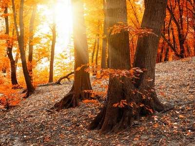 őszi erdőben 198106