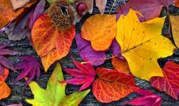 Őszi kirándulások