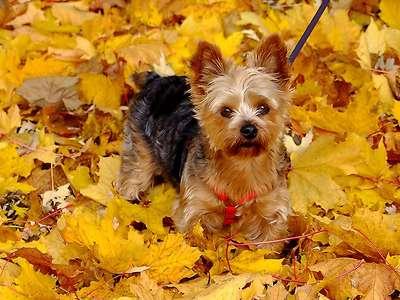őszi táj és kutyus 198876