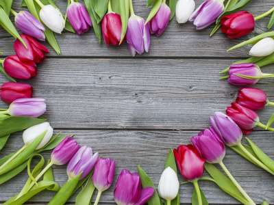 szív tulipán 206791