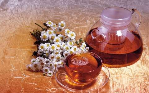 kamilla tea 224521