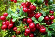 A növények természetes gyógyító ereje