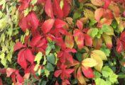 Őszi színek: színkavalkáddal a jó közérzetért!