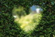 Az igazi boldogság az önzetlen szeretetben teljesedik ki