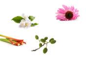 Bio útmutatás a kozmetikában